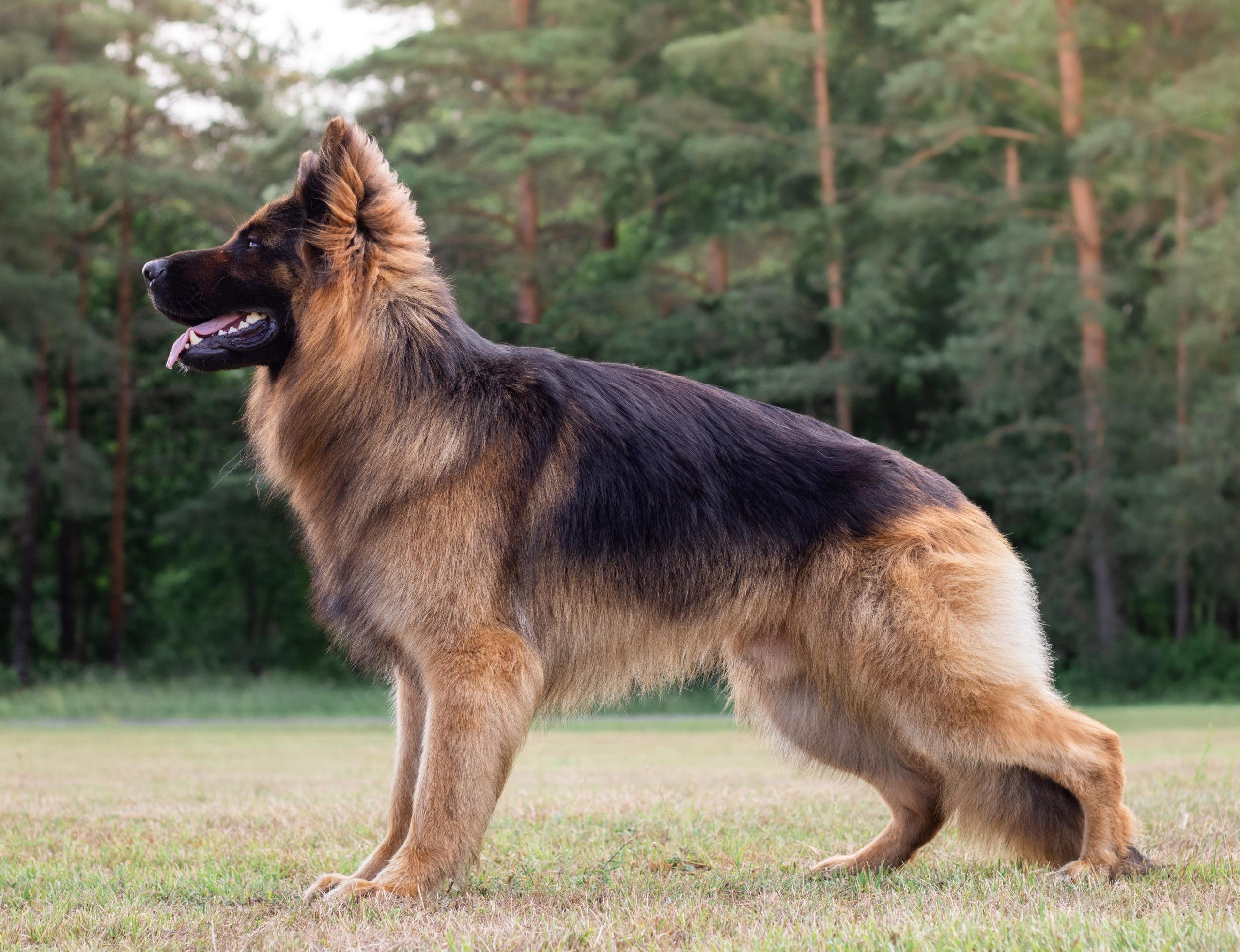 Esthund Moon Caesar, väiksem, kodulehele
